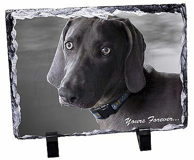 Weimaraner Dog 'Yours Forever' Photo Slate Christmas Gift Ornament, AD-W79SL