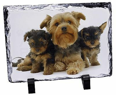 Yorkshire Terrier Dogs Photo Slate Christmas Gift Ornament, AD-Y3SL