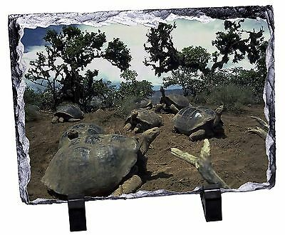 Galapagos Tortoise Photo Slate Christmas Gift Ornament, AR-T11SL