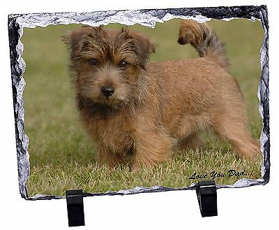 Norwich/Norfolk Terrier 'Love You Dad' Photo Slate Christmas Gift Orna, DAD-80SL