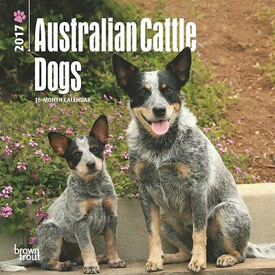 """Australain Cattle Dogs 2017 MINI WALL CALENDAR Browntrout 7"""" X 7"""""""