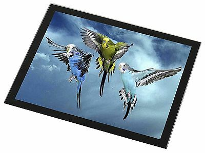 Budgies in Flight Black Rim Glass Placemat Animal Table Gift, AB-96GP