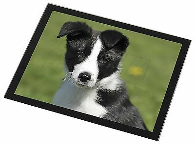 AD-BC4GP Border Collie Black Rim Glass Placemat Animal Table Gift