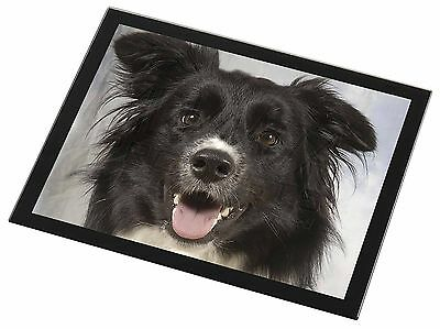 Border Collies Glass Paperweight in Gift Box Christmas Present AD-CO2PW