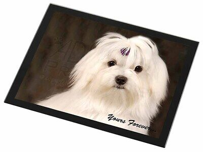 Maltese Dog 'Yours Forever' Black Rim Glass Placemat Animal Table Gift, AD-M1yGP