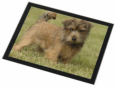 Norfolk Terrier Dog Black Rim Glass Placemat Animal Table Gift, AD-NT1GP