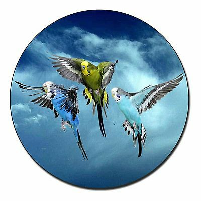 Budgies in Flight Fridge Magnet Stocking Filler Christmas Gift, AB-96FM