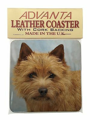 Norfolk-Norwich Terrier Dog Single Leather Photo Coaster Animal Breed , AD-NT2SC