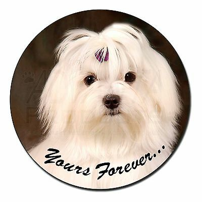 Maltese Dog 'Yours Forever' Fridge Magnet Stocking Filler Christmas Gi, AD-M1yFM