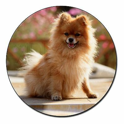 Pomeranian Dog on Decking Fridge Magnet Stocking Filler Christmas Gif, AD-PO89FM