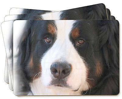 Bernese Mountain Dog Picture Placemats in Gift Box, AD-BER5P