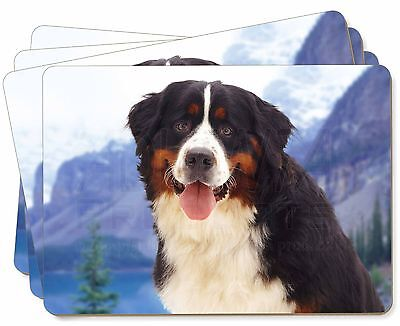 Bernese Mountain Dog Picture Placemats in Gift Box, AD-BER6P