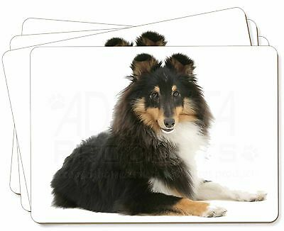 Tri-Col Sheltie Dog Picture Placemats in Gift Box, AD-SE1P