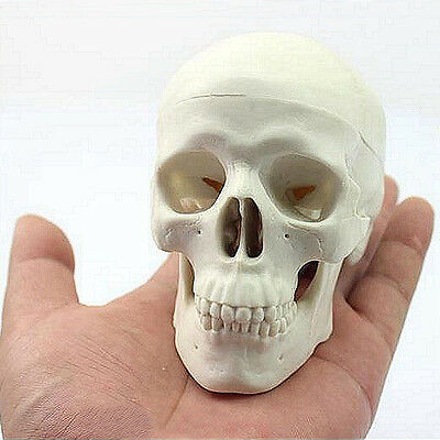 Teaching Mini Skull Human Anatomical Anatomy Head Medical Model Convenient Y