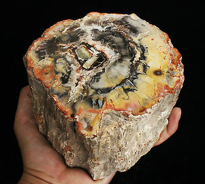 1795g POLISHED PETRIFIED WOOD FOSSIL AGATE BRANCH STAND Madagascar