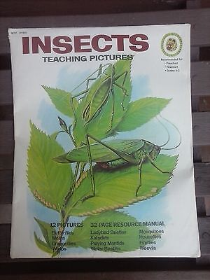 """Vintage """"Insects"""" Teaching/Bulletin Board Pictures (c. 1977)"""