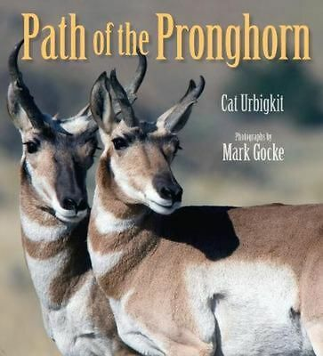 Path of the Pronghorn by Cat Urbigkit Hardcover Book (English)