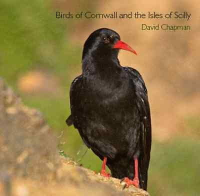 Birds of Cornwall and the Isles of Scilly (Pocket Cornw - Chapman, David NEW Pap