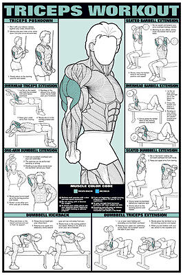 Arm Workout TRICEPS Professional Weight Training Fitness Gym POSTER Wall Chart