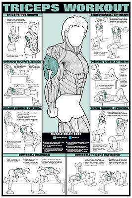 TRICEPS WORKOUT Professional Arm Weight Training Fitness Gym Poster Chart