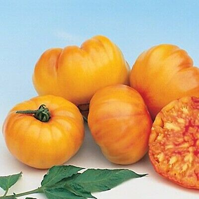 Seeds Yellow Giant Tomato Germanskiy Polosatyy - German Striped Heirloom