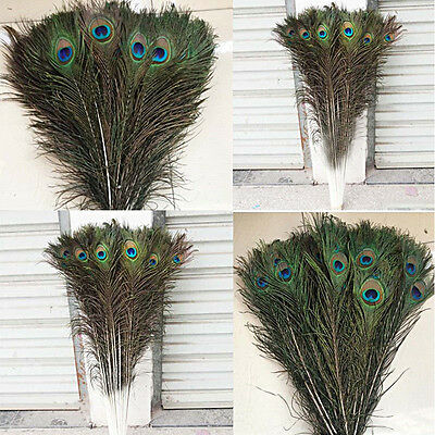 10/20Beautiful Natural Pavo real Cola Feathers10-12or16-50.8 cm