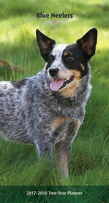 Blue Heelers 2017-2018 2 year pocket planner calendar /Australian Cattle Dogs
