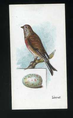 1906 Lambert and Butler  Birds and Eggs Linnet #4