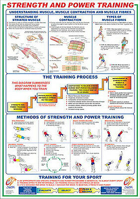 Professional Fitness Wall Chart STRENGTH AND POWER TRAINING Workout Wall Poster