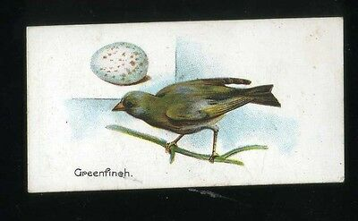 1906 Lambert and Butler Birds and Eggs Greenfinch #50