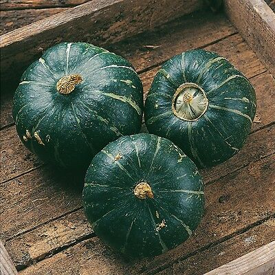 Kings Seeds - Squash, Winter Squash Buttercup - 15 Seeds