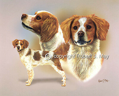 Brittany Spaniel Multistudy Giclee Print by Robert May