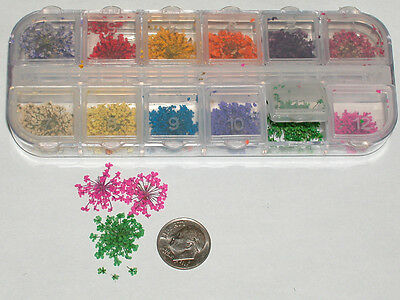 100's of super tiny dried flowers KIT 12 colors Mixed Miniature for glass bottle