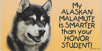 My ALASKAN MALAMUTE is SMARTER than your HONOR STUDENT car/fridge MAGNET 4X8
