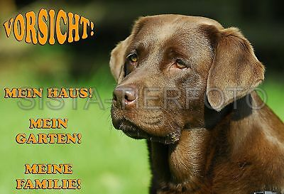 Metall-Warnschild A4: Labrador Retriever 4482