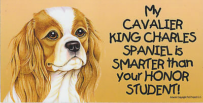 My CAVALIER KING CHARLES SPANIEL is SMARTER than your HONOR STUDENT car MAGNET