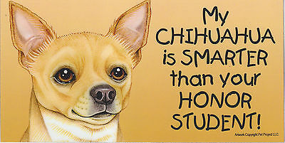 My CHIHUAHUA (TAN) is SMARTER than your HONOR STUDENT car/fridge MAGNET 4X8