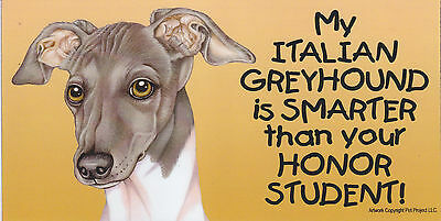 My ITALIAN GREYHOUND is SMARTER than your HONOR STUDENT car/fridge MAGNET 4X8