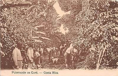 COSTA RICA ~ WORKERS ON PLANTATION HARVESTING COFFEE BEANS ~ c. 1904-14