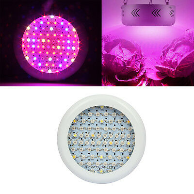 300W LED Plant Grow Light Panel Lamp for Growth Flower hydroponics Full Spectrum