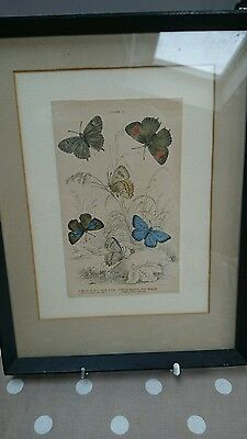 Vintage Framed Hand Tinted Lithograph Book Plate Butterfly Art Print