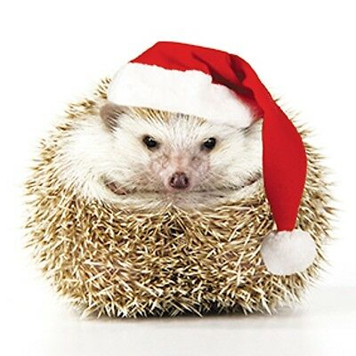 Pack of 8 Mini Happy Hedgehog RNLI Lifeboats Charity Christmas Cards Xmas Card P