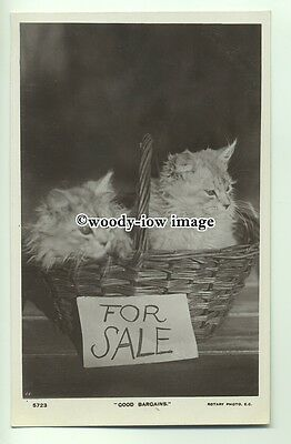"an0332 - Two Kittens FOR SALE in Basket, ""Good Bargains"" - Postcard"
