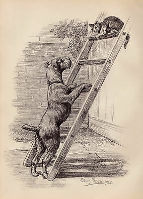 Vintage IRISH TERRIER Dog Print 1950s Gallery Wall Art Gift for Dog Lover 1693