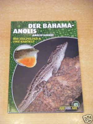 "NTV Art for Art ""Der Bahama-Anolis"""