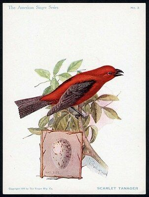 SINGER SEWING MACHINE Trade Card 1898 - Bird Series SCARLET TANAGER and Egg No 3