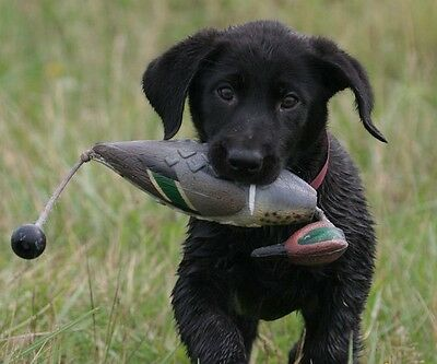 Avery Greenhead Gear GHG Dog EZ Bird GW Teal ATB Training Bumper Dummy Drake