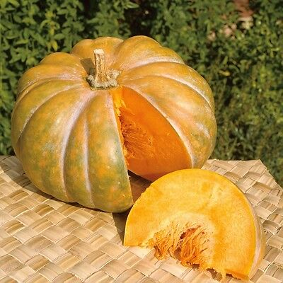 Courge - Musquee De Provence - 15 Graines