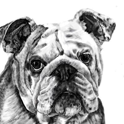 "Print - A Bulldog 11"" x 14""  or 12"" x 12"""