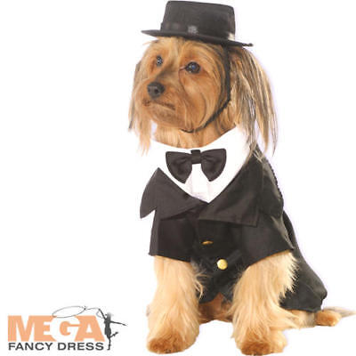 Dapper Dog Fancy Dress Upper Class Victorian Gentlemen Suit Puppy Pet Costume